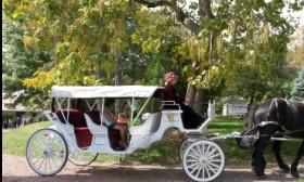 Carriage Ride Anyone?